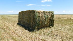 The finest Alfalfa hay and feedstock in the Southwest